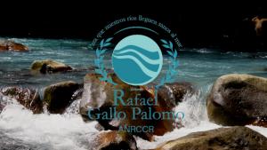 Rafael Gallo Palomo Award